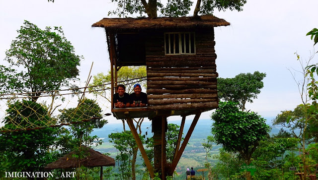 rumah pohon kalibaya