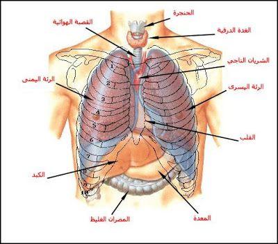 بحث حول جهاز التنفس