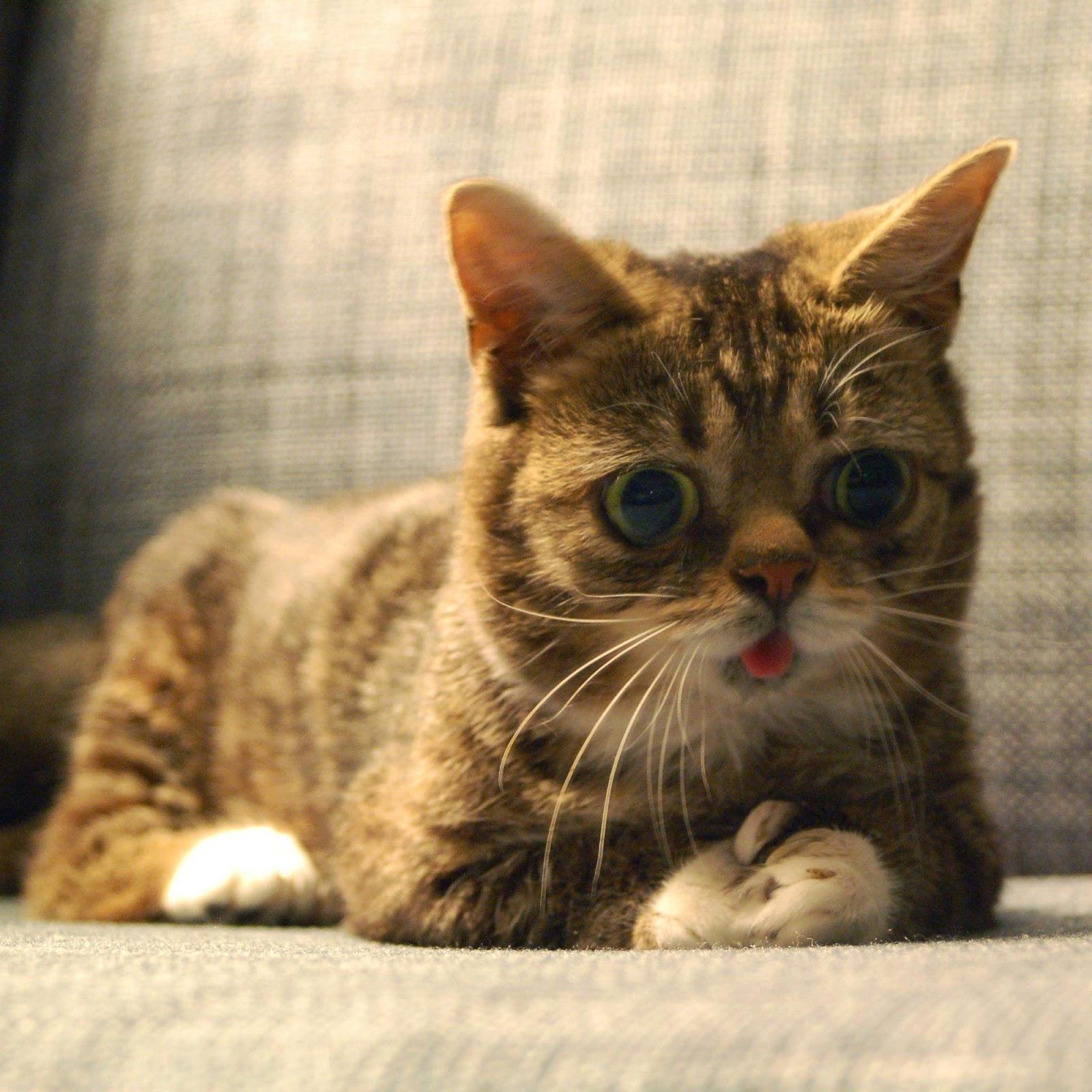 Funny Cats: Funny Cats - Part 217 (40 Pics + 10 Gifs)