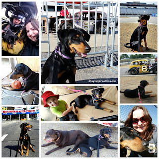 rescued doberman mix US Legends race cars