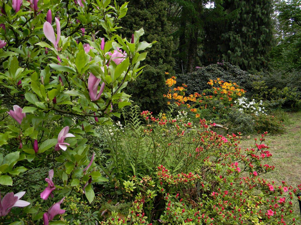 kwiaty, krzewy, drzewa, atrakcje Kórnika