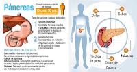 https://steviaven.blogspot.com/2018/06/plantas-medicinales-para-desintoxicar-pancreas.html