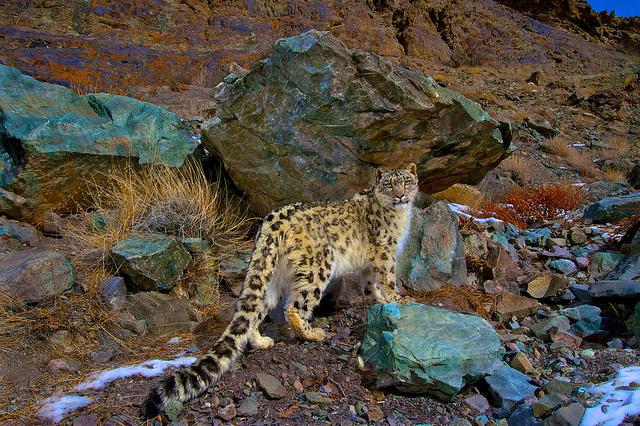 Hemis-National-Park-India