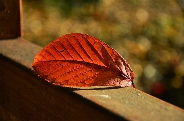 outono, poesia, poema, versos, Vanessa Vieira, Pensamentos Valem Ouro