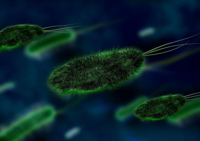 سعر زراعة الخلايا الجذعية،زراعة الخلايا الجذعية،الخلايا الجذعية،