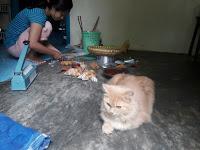 Kucing pling setia