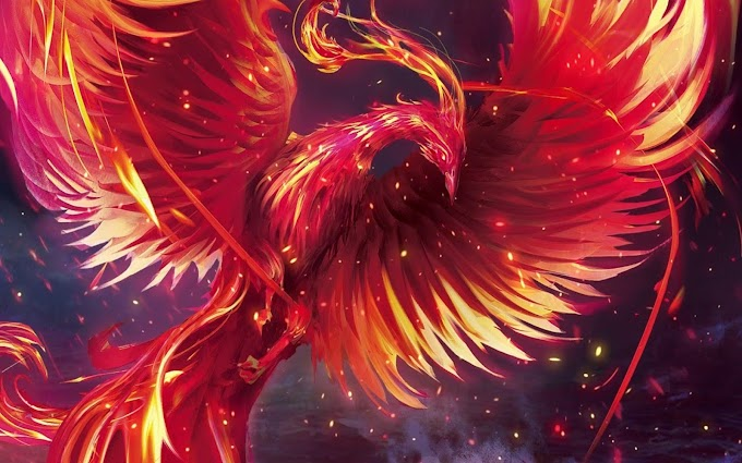 Gainward Phoenix Wallpaper
