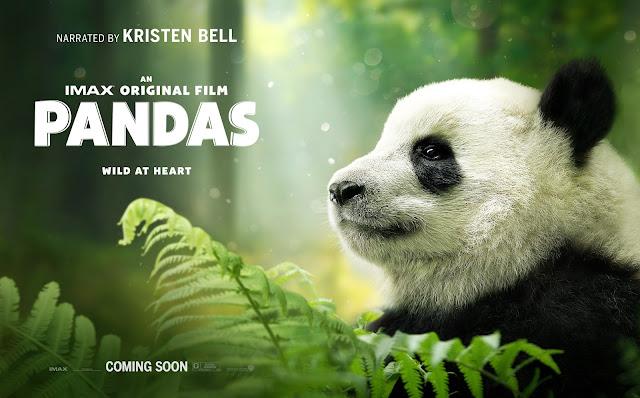 Pandas, panda, IMAX, #IMAXPandas