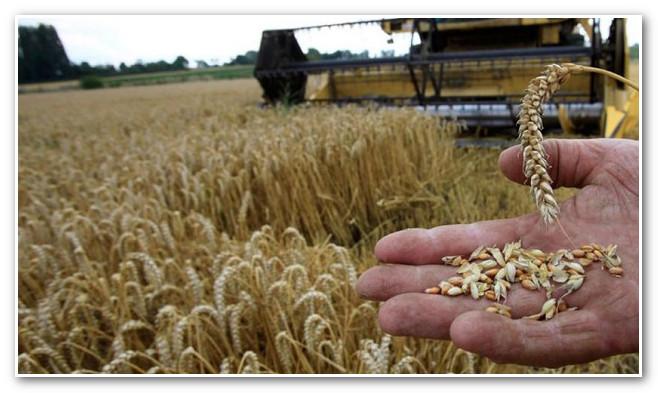المغرب يُطمن الأوربيين بعد إلغاء الضرائب عن القمح الروسي و يستورد 3 ملايين طن من القمح الأوربي !