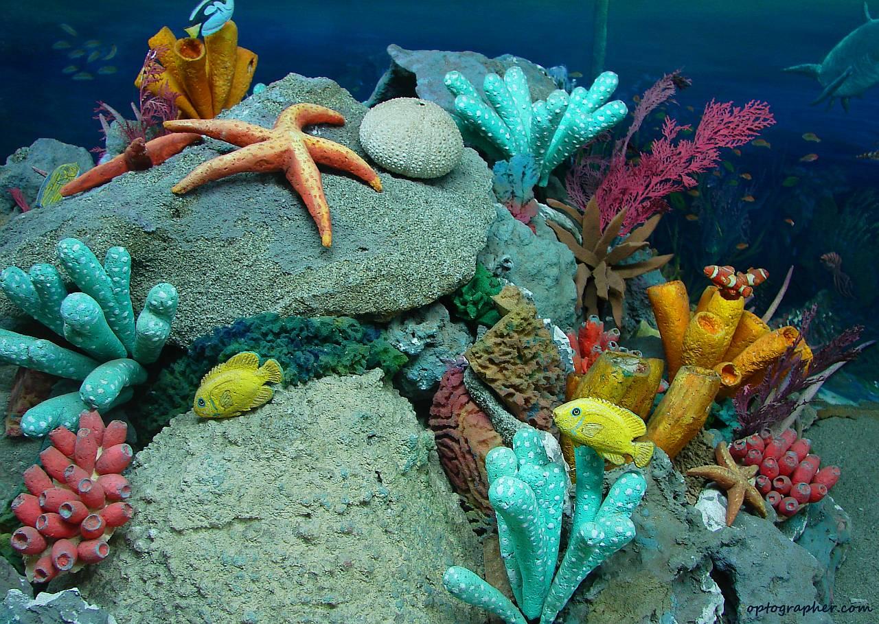 244 best Under the Caribbean Sea images on Pinterest |Ocean Life Plant Caribbean