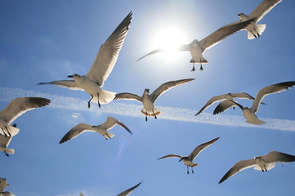 Il mondo degli animali protagonisti sono gli uccelli
