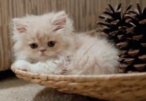 10 Nama Yang Cocok Buat Kucing Anda My Cat
