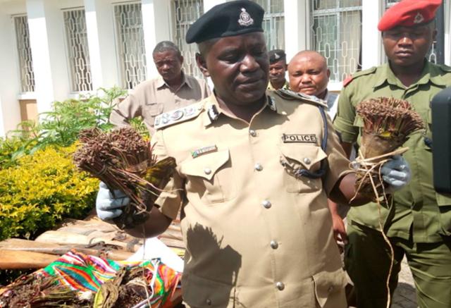 Polisi Tabora yakamata watu 4 wakiwa na Mirungi na Gunia 5 za Bhangi