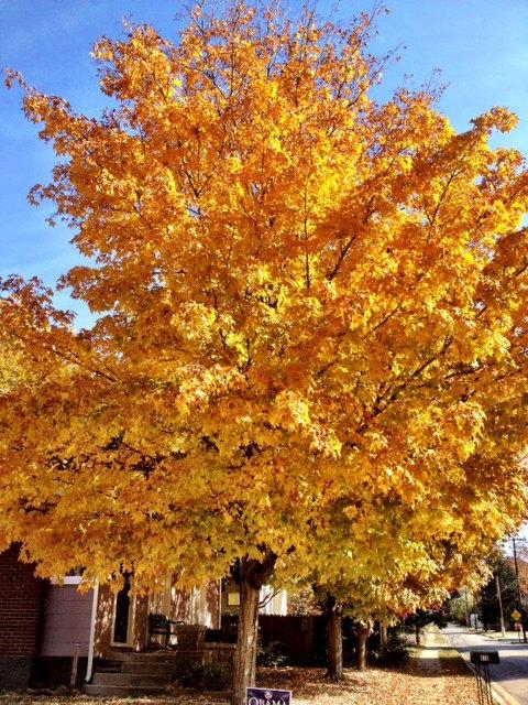 Fayetteville, Ar. November afternoon.