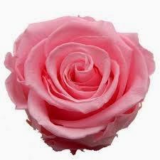 Signification De La Couleur Des Roses Avenue Romantique