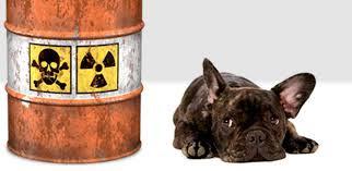 toxicología veterinaria