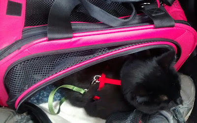 Black cat partially inside a black and pink canvas and mesh travel carrier that has a side panel unzipped. The cat is wearing a dark-green harness with a light-green leash attached to it