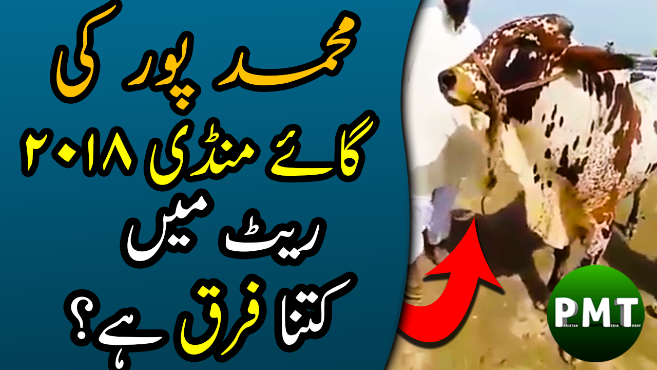 Cow Mandi 2018 Muhammad-Pur | Latest Price Updates of Cows