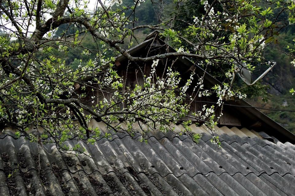 Hình Nền Phong Cảnh Mùa Xuân Đẹp – Hình nền Mùa Xuân 1/2019