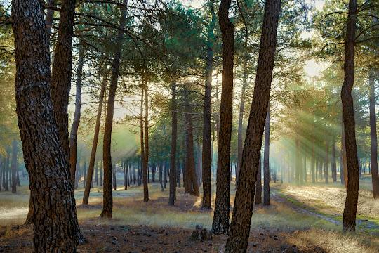 sol-tras-pinos