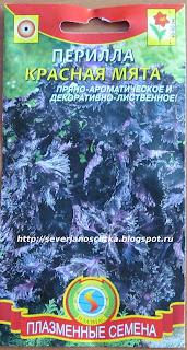 перилла - новое пряное и декоративное растение