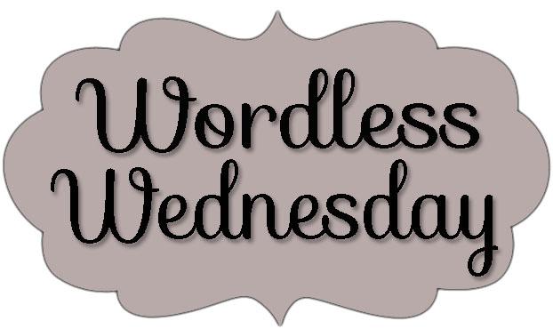 wordless, wednesday,