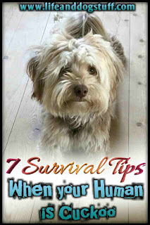 7 Survival Tips When Your Human Is Cuckoo