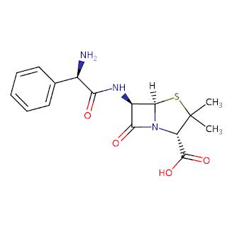 Mekanisme aksi Antibiotik Ampicillin (Ampisilin)