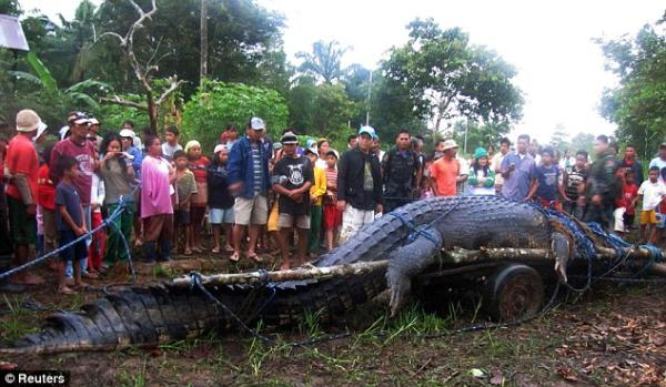 Lolong, o maior crocodilo do mundo