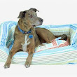 Max Studio Dog Bed - Interested Media