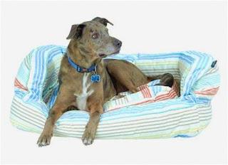 Max Studio Dog Bed