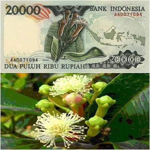 uang indonesia 20 ribu cengkeh
