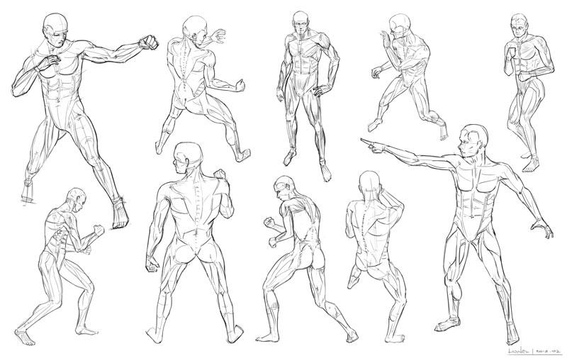human anatomy manga  u2013 periodic  u0026 diagrams science