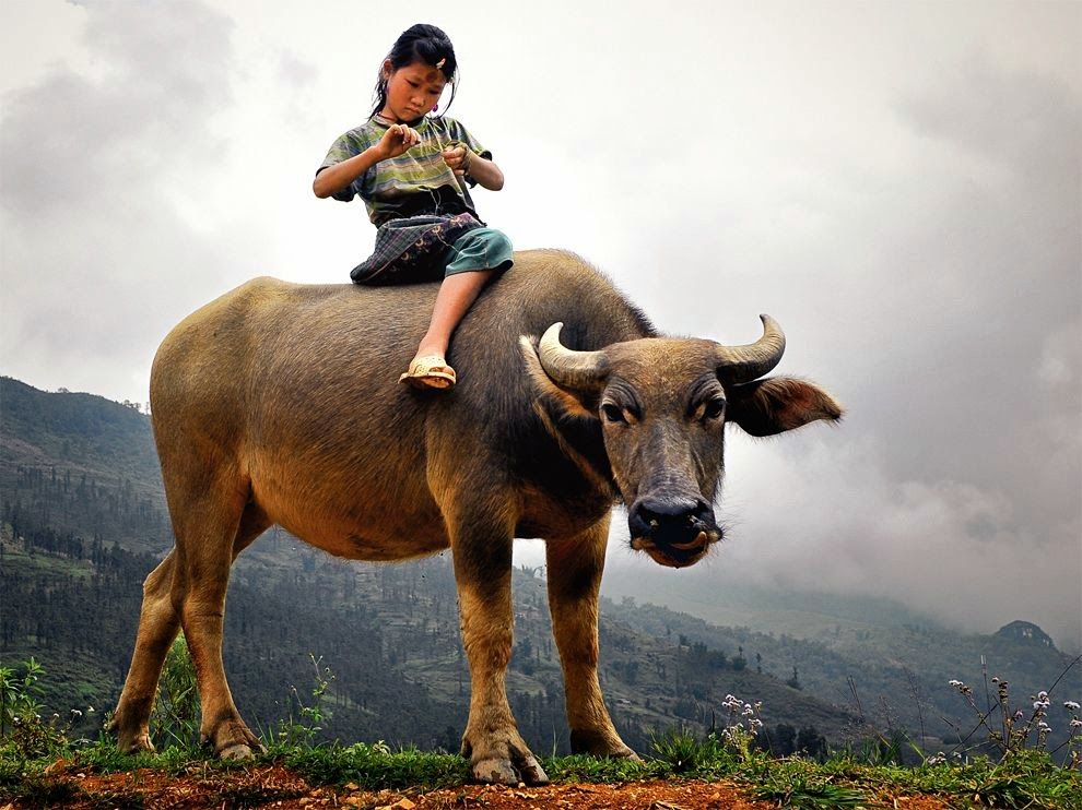 sweet animal pic, wild animal photo, pet animal picture, cute animal pic