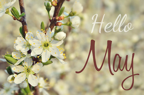 Image result for hello may day pics