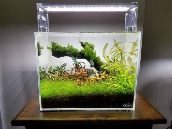 Bể thủy sinh cubic trồng thảm cỏ ngưu mao chiên