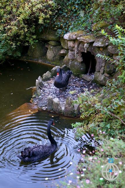 park pena łabędzie