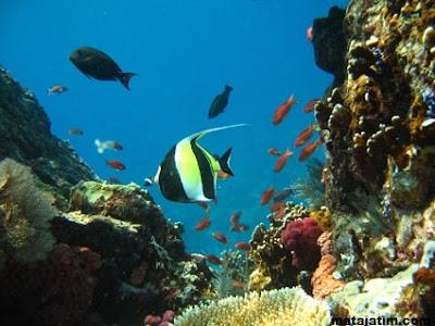 macam ikan dan keindahan karang di pulau komodo