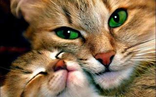 Fond d'écran animaux hd gratuit