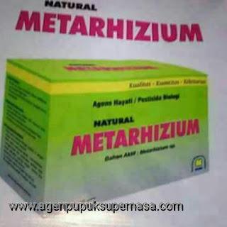 petisida biologis Metarhizium