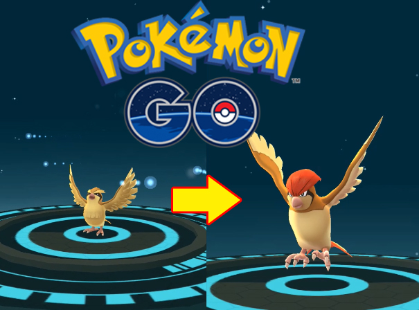 Pokemon GO : Pidgey Evolution Into Pidgeotto