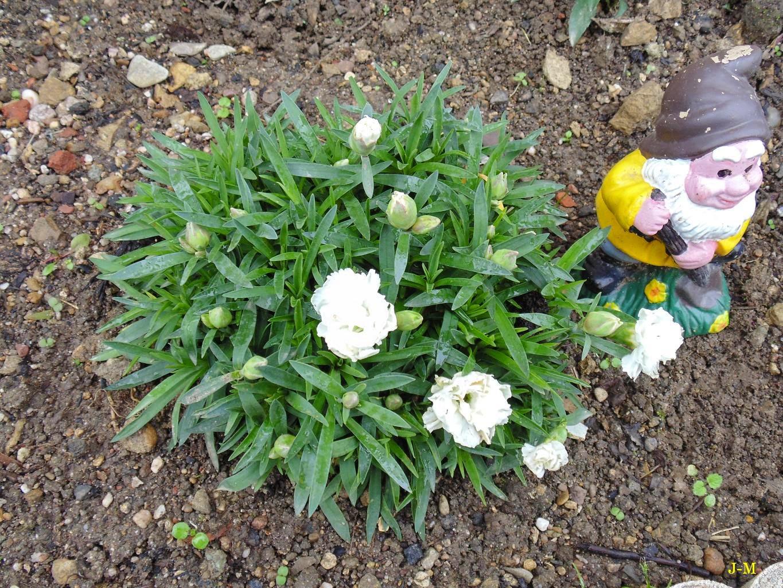 mon jardin en moselle: 2014