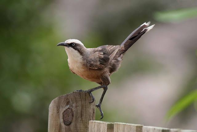 Burung Burung Tanah Air