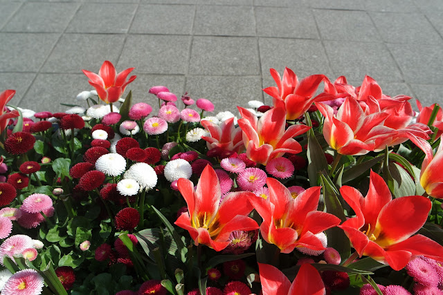 flower bed with red, white, and pink flowers