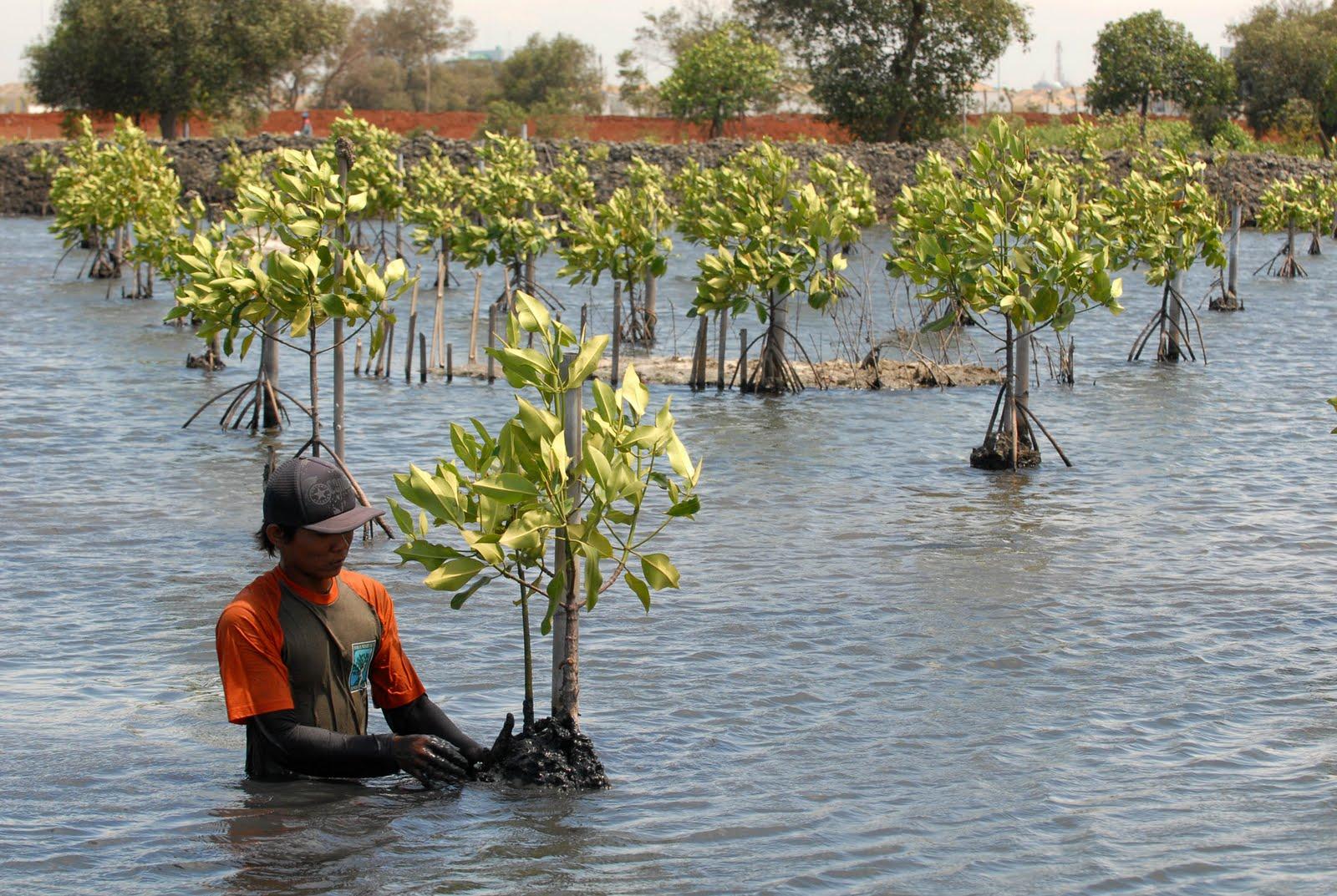 Pelestarian Dan Konservasi Sumber Daya Alam Atau Preservation And