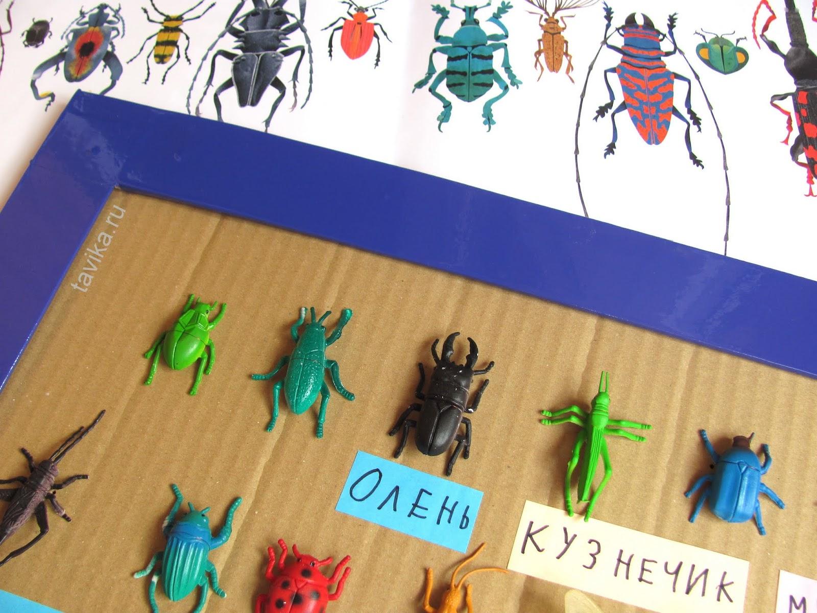 развивающее занятие о насекомых