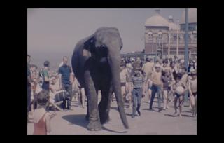 Elephant on promenade