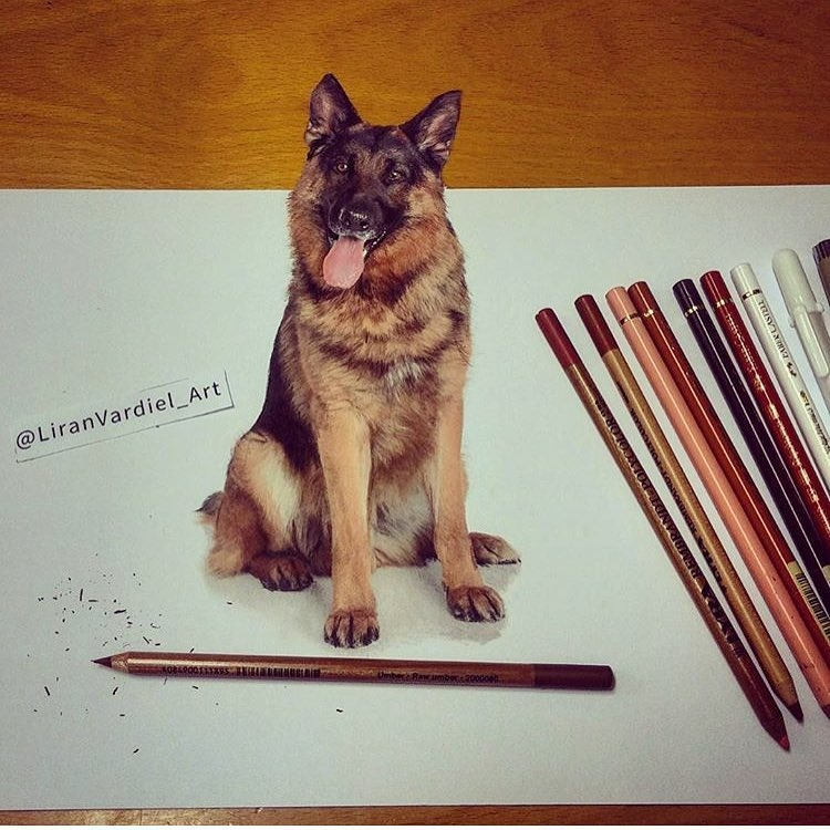 11-Liran-Vardiel-Animal-Drawings-using-Colored-Pencils-www-designstack-co