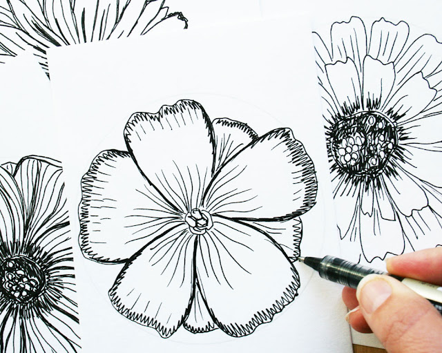 Louise Gale, Drawing, Botanical Sketches,  flowers, black and white