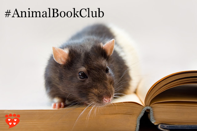A pet rat on a book. This month's book is Some We Love, Some We Hate, Some We Eat by Hal Herzog
